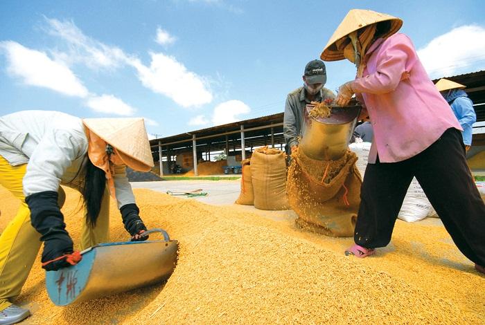 cách mở đại lý gạo
