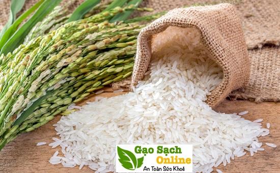gạo sạch hữu cơ đóng túi