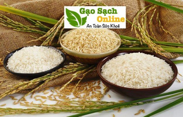 Giá gạo nếp hôm nay tại tphcm